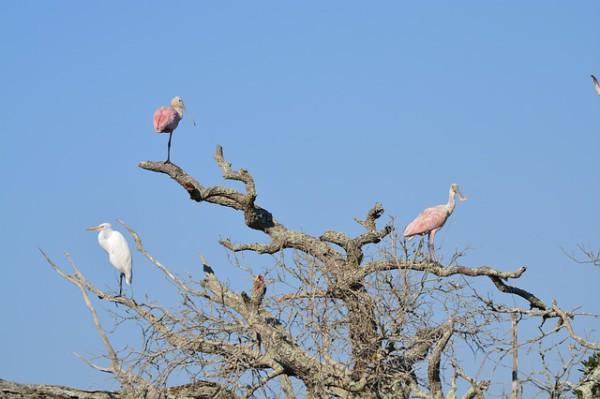 Andalucía se mantiene como líder en turismo Ornitológico