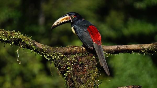 Costa Rica fomentará la gastronomía tradicional para atraer a nuevos turistas