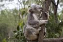 Las 6 visitas imprescindibles en Brisbane