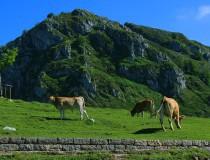 Asturias sigue siendo líder el turismo rural en España