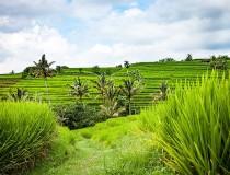 Indonesia podría prohibir las bebidas alcohólicas a los turistas