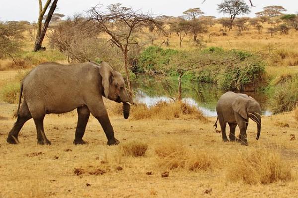 El objetivo de Tanzania 2018 en materia de turismo