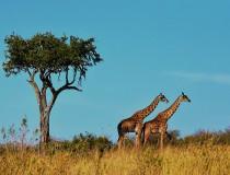 Las rutas de Ethiopian Airlines para conocer el continente africano
