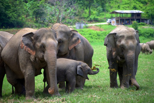 Las 7 visitas para conocer Chiang Mai