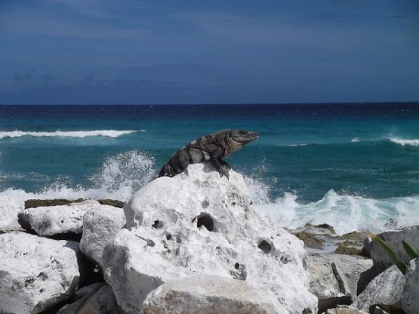 Las 6 visitas para disfrutar en la isla de Cozumel