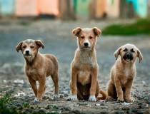 Aumentan las casas rurales que admiten mascotas en España
