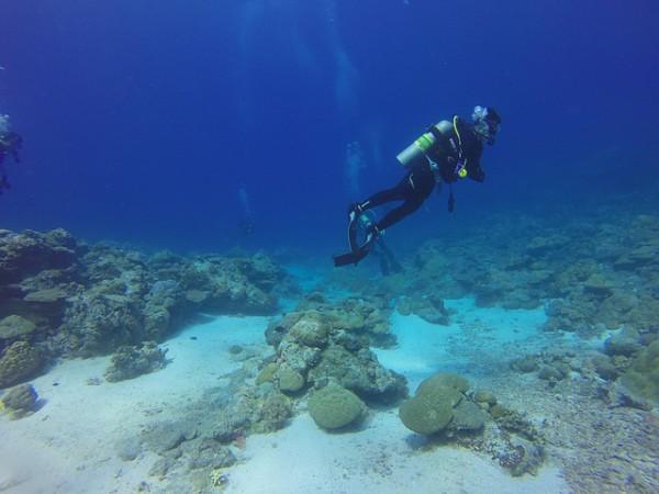 Mejora el Turismo de Buceo
