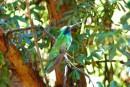Honduras quiere seguir mejorando en el Aviturismo