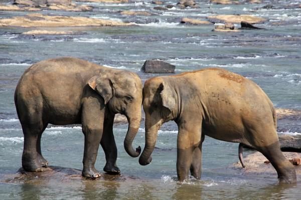 Sri Lanka busca mejorar el turismo chino