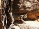 Las 7 visitas para conocer Tucson