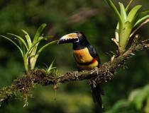 Costa Rica consigue toda su energía de fuentes renovables