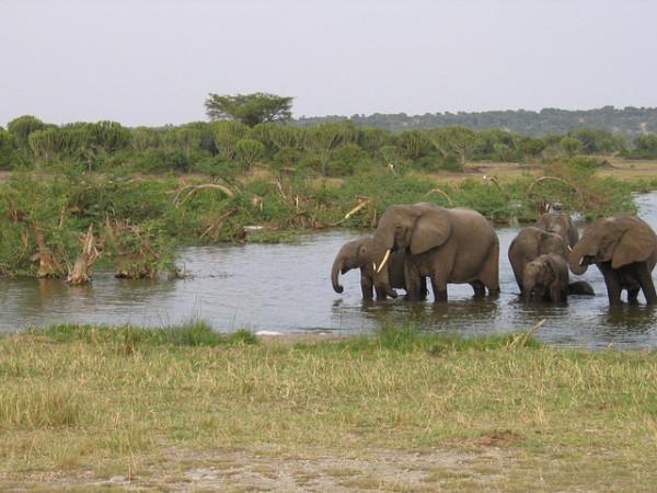 Interesante promoción turística de Uganda