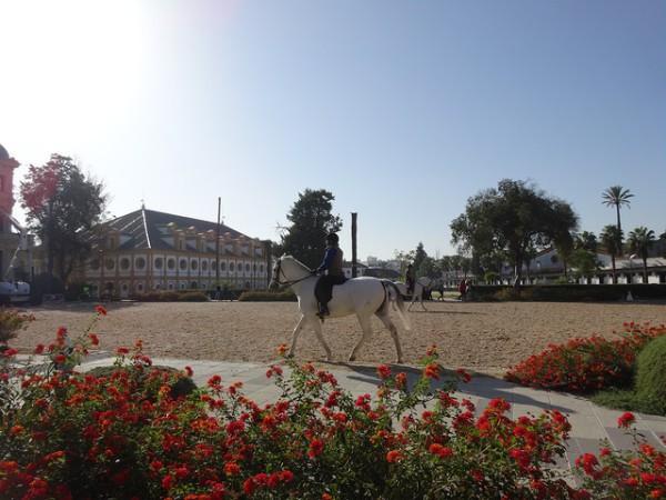 La Real Escuela Andaluza del Arte Ecuestre, en Jerez