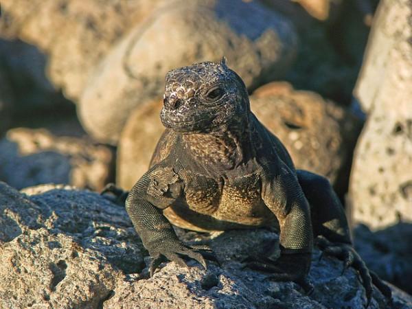 El impacto del turismo en las islas Galápagos