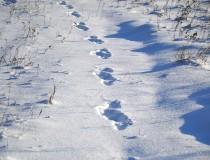 Un pueblo muy frío: Oymyakon