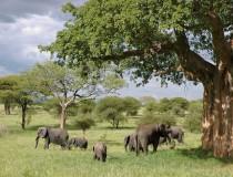 Perspectivas positivas para el turismo en Tanzania