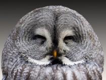 ¿Qué son los 'owl cafes'?