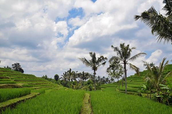 Emirates ofrecerá un vuelo adicional a Bali
