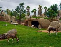 El Bioparc de Valencia tiene nuevos habitantes que podemos conocer