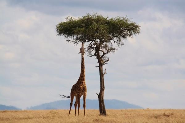 Kenia, destino destacado en África