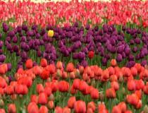 El jardín más lindo del mundo