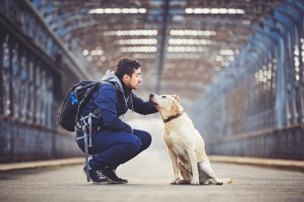 Viajar con tu perro en el tren, normas, consejos y obligaciones para tener un viaje agradable