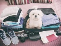 Consejos para viajar con tu mascota estas vacaciones