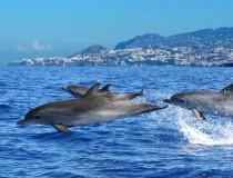 Madeira, un lugar privilegiado para nadar con delfines