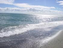 Playas andaluzas que admiten perros en este verano de 2017