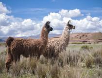 La Paz fomentará el agroturismo en Bolivia