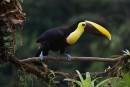 Costa Rica buscará nuevas inversiones en materia de turismo