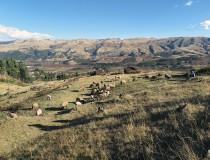 El Titicaca Train llega a Perú