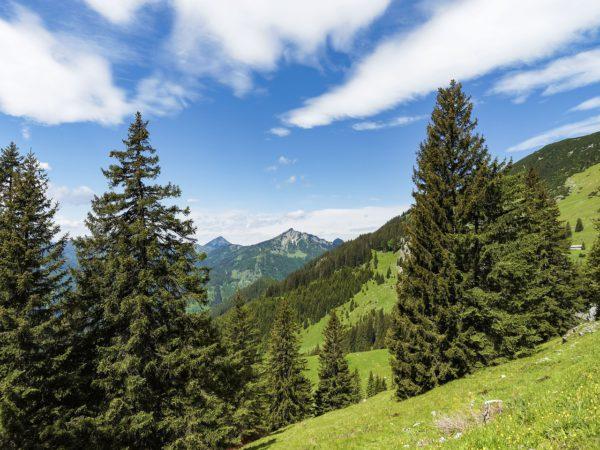 Vacaciones de verano en granjas del Tirol