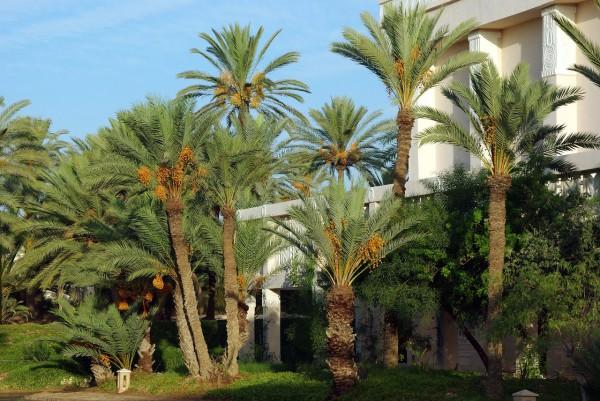 BlueBay Hotels anuncia un nuevo hotel en Túnez