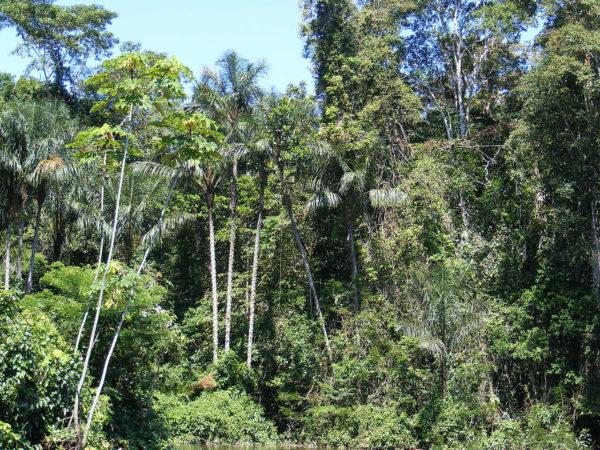Perú quiere fomentar el turismo en la Amazonía