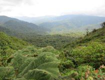 Costa Rica presenta su nueva identidad turística