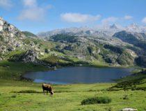 Cinco platos para disfrutar de la gastronomía de Asturias