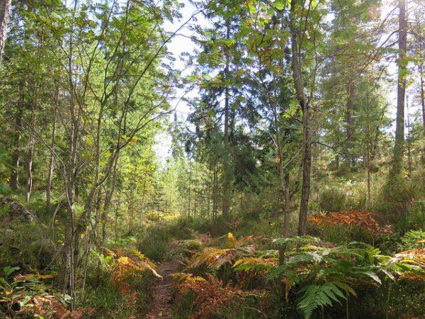 Escapada de verano para conocer Noruega