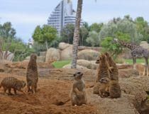 Bioparc se confirma como un destino turístico preferencial para extranjeros en 2017