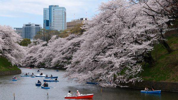 Los festivales del otoño para disfrutar en Tokyo