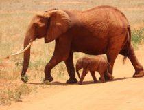 Los destinos africanos para disfrutar de un safari