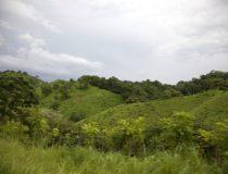 Los alojamientos naturales de Centroamérica para disfrutar en vacaciones