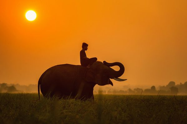 Los principales encantos para conocer en Tanzania