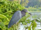Descubrir la Ruta de las Aves en Costa Rica