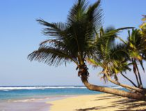 Sigue avanzando el turismo en República Dominicana