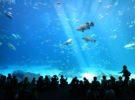 Los 5 acuarios más grandes del mundo