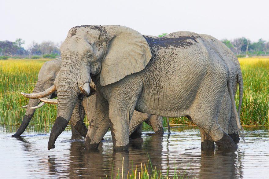 Las 4 mejores visitas para hacer en Botswana