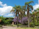 Las zonas naturales más destacadas para conocer en Montevideo