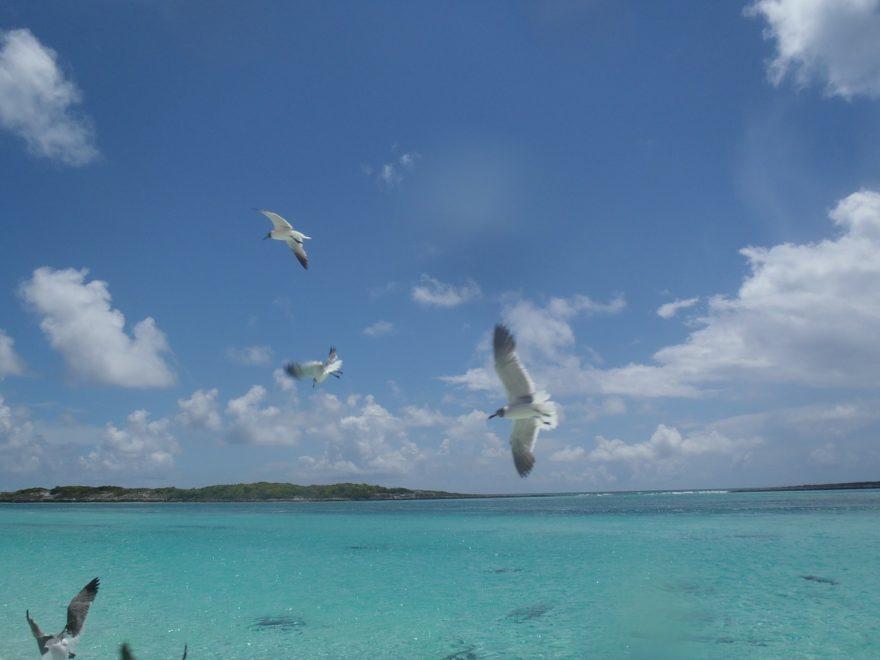 Los sitios recomendables para disfrutar en Bahamas