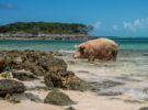 Top 6 de las playas más increíbles para ver animales autóctonos y pasar un día diferente